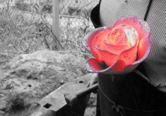 Rose nordique